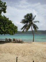 Palm tree beach: St. Thomas, US Virgin Islands
