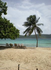 Palm tree beach: St. Thomas, US Virgin Islands