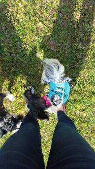 Princess Pup. Fort Wort, TX