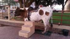 Hook 'em. Fort Wort, TX