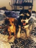 Luna and Zelda, BFFL (c. Marie R. Carlson)