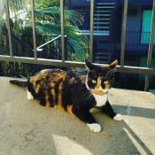 Adventure Cat (c. Marie R. Carlson)